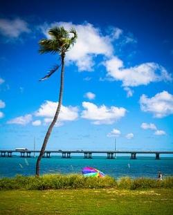 Diese Palme in Florida bekommen HIV-Positive nun auch mit Einreisegenehmigung zu sehen - Quelle: jfl1066 / flickr / cc by 2.0